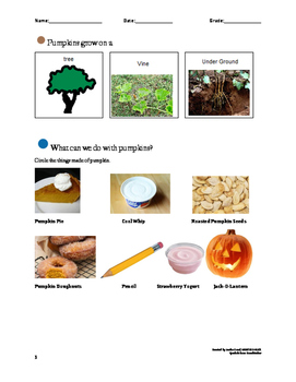 Pumpkin Observational Language Activity