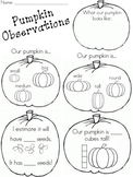 Pumpkin Observations