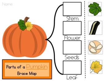 Pumpkin Parts Brace Map FREEBIE