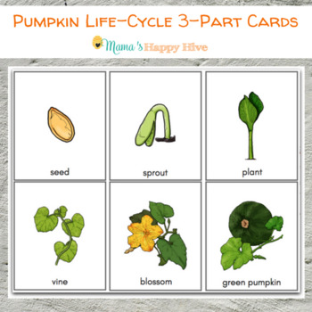 pumpkin parts and life cycle 3 part cards tpt. Black Bedroom Furniture Sets. Home Design Ideas