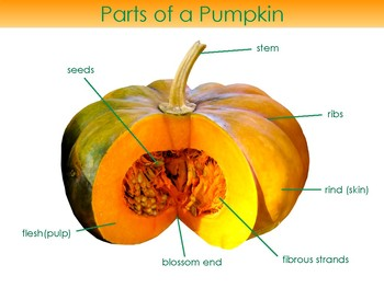 Parts of a    Pumpkin       Diagram     3part cards and coloring