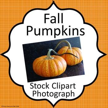 Pumpkin Photo Stock Real Life Image