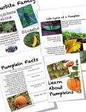 Pumpkin Reader and Lap Book