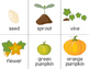 Pumpkin Science Investigations (Pumpkins in a Snap!)