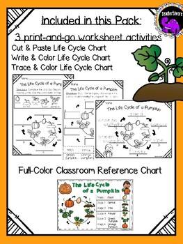 Pumpkin Science: The Life Cycle of a Pumpkin {Kindergarten/First Grade}