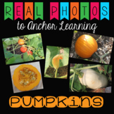 Pumpkin Stock Photos - 27 images for Personal and Commercial Use