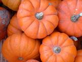 Pumpkin Taste Testing