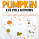 Pumpkin (Thanksgiving) life cycle activities