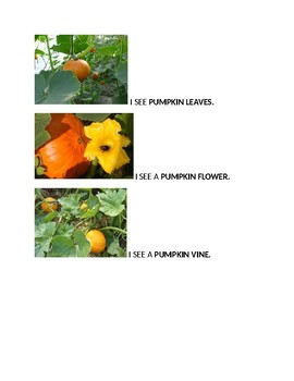 Speech Therapy-Special Education-Pumpkin Vocabulary