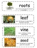 """Pumpkin Vocabulary Cards - """"Pumpkin Circle"""" & """"A Day at the Pumpkin Patch"""""""