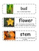 "Pumpkin Vocabulary Cards - ""Pumpkin Circle"" & ""A Day at th"