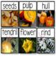 Pumpkin Vocabulary {Themed Vocabulary Cards}