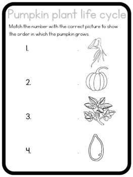 Pumpkin life cycle circle time questions