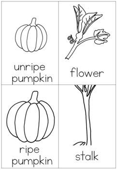 Pumpkin life cycle nomenclature cards