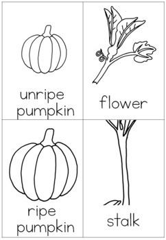 Pumpkin life cycle nomenclature cards