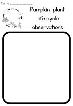 Pumpkin life cycle observation sheet