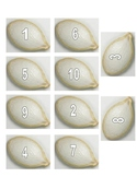 Pumpkin seeds-counting to 10