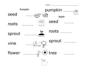 Pumpkin vs Apple