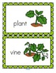 Pumpkins Life Cycle Activities for Preschool and Pre-K