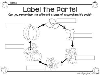 Pumpkins -An Activity-Filled Unit