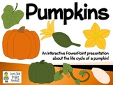 Pumpkins ~ An Interactive PowerPoint Presentation of their Life Cycle