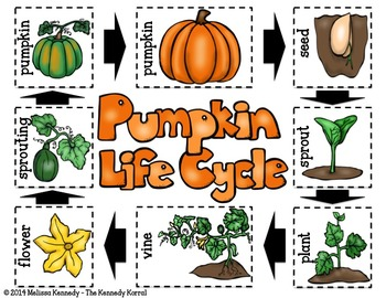 Pumpkin Life Cycle and Pumpkin Reader