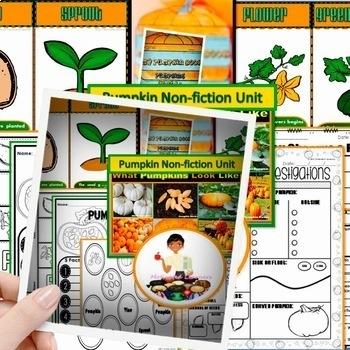 Pumpkin: Pumpkins Nonfiction Unit Pumpkin Life Cycle   Pumpkin Investigation