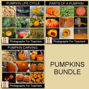 Pumpkins Photograph Bundle