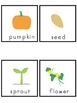 Pumpkins Picture Word Bank and Picture Cards