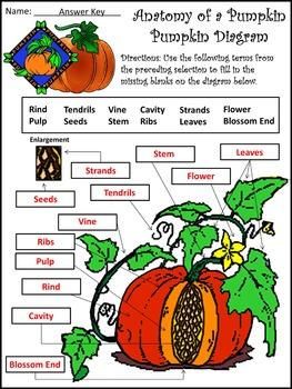 Halloween Activities: Anatomy of a Pumpkin Activity Packet Bundle - Color & B/W