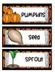 Pumpkins Pumpkins