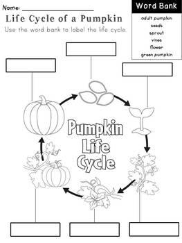 Pumpkin Parts, Life Cycle, & STEM Activities