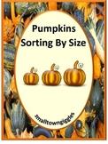 Pumpkins Sort by Size Kindergarten Math Special Education Math Fine Motor Skills