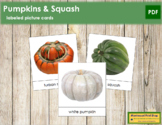 Pumpkins and Squash Picture Cards
