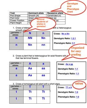 Pungent Squares, Mendel's Peas and More Homework