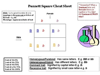 Punnet Square Cheat Sheet