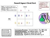 Punnet Square Cheat Sheet