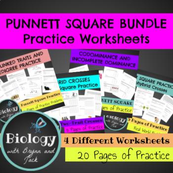 Punnet Square Practice Bundle