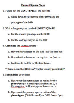 Punnet Square Steps and Practice