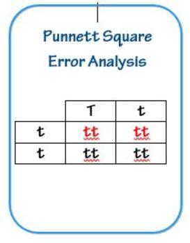 Punnett Square Error Analysis