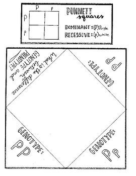 Punnett Square Foldable