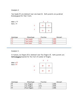 Punnett Square Interactive Notes