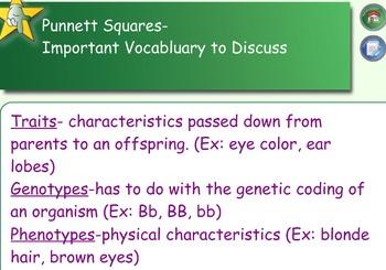 Punnett Square Lesson
