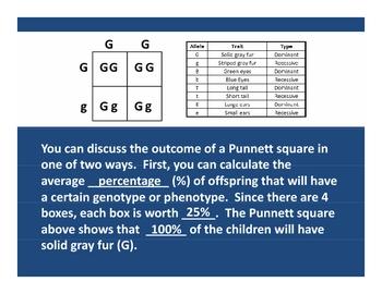 Punnett Square PowerPoint Lesson Plan
