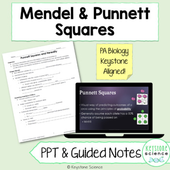 Punnett Square PowerPoint, Guided Notes with KEY