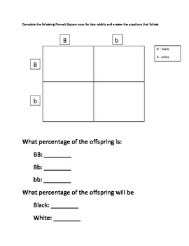Punnett Square Practice - File Folder Activity