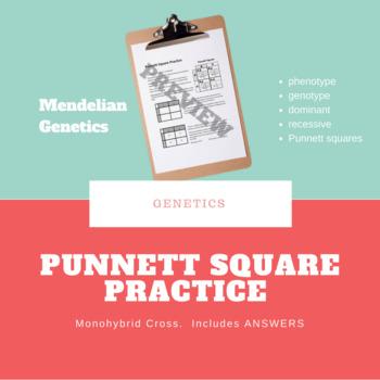 Punnett Square Practice Monohybrid Squares