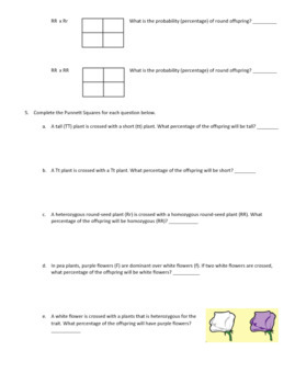 Punnett Square Practice Problems