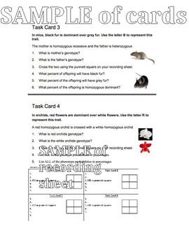 Punnett Square Practice Task Cards