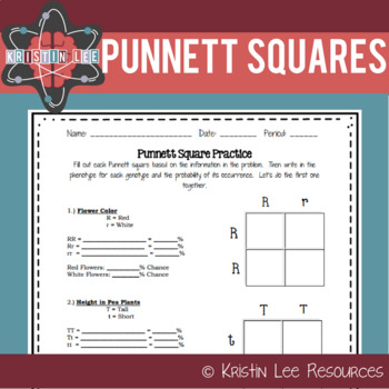 punnett square practice worksheet ngss aligned by kristin lee resources. Black Bedroom Furniture Sets. Home Design Ideas
